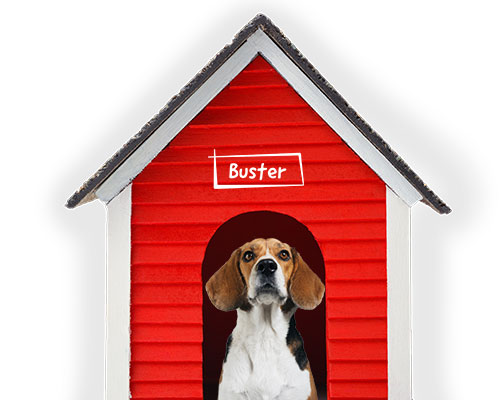 Lifetime Pet Cover's Buster the Beagle in his house