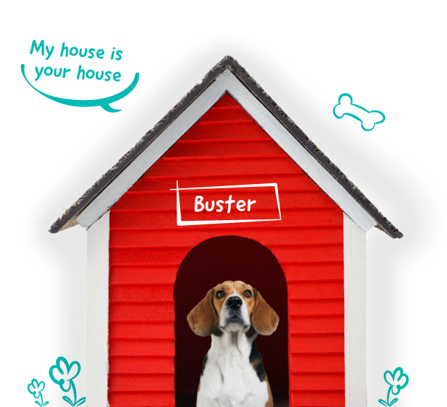 Lifetime Pet Cover's Buster the Beagle sitting up safe in his house thanks to his pet insurance