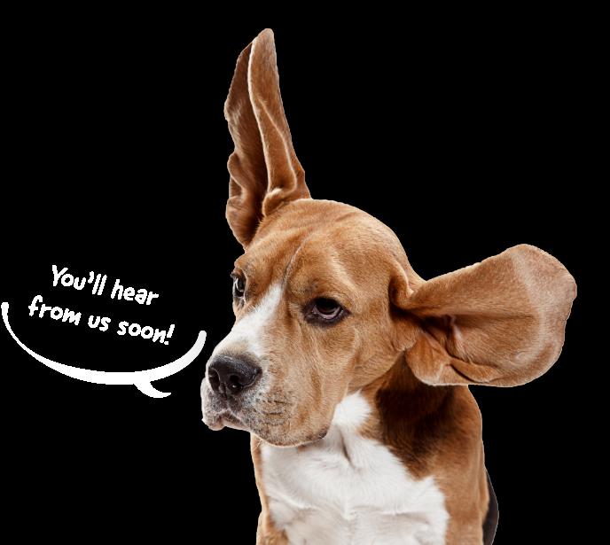 Lifetime Pet Cover | Award Winning Pet Insurance